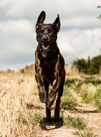 Osteopathie am Hund Diana Tiebes