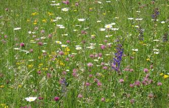 Blumenwiese, Foto: G. Hagemeister