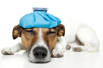 Hund Schmerz Hundephysiotherapie Heike Amthor Leipzig