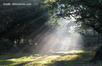 Regelmäßig Sonne tanken wird Dir gut tun!