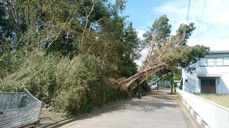 八街市 電線に倒木 伐採撤去