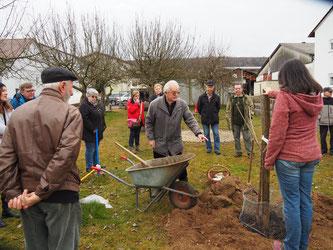 Foto: E. Heybach:  Bildunterschrift: Schritt für Schritt wurde gezeigt, wie man einen Obstbaum pflanzt.
