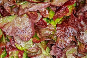 Salat frisch