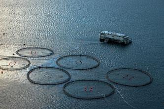 Aquakulturen im Meer