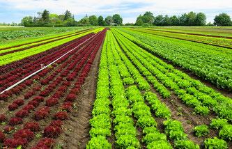 Feld Gemüse