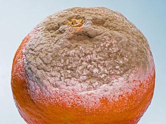 Orange verschimmelt