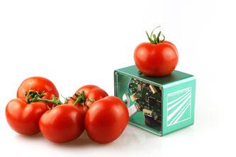 Tomaten Scanner Frische