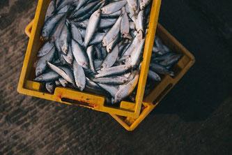 Fisch Box Markt