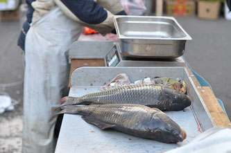 Karpfen Fisch Waage