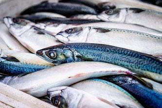 Fische frisch gefangen
