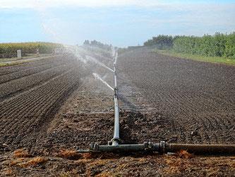 Bewässerung Feld