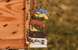 Bienen Bienenstock Flug
