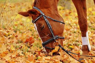 Pferd auf Herbstwiese
