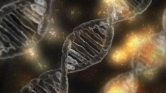 DNA Genom