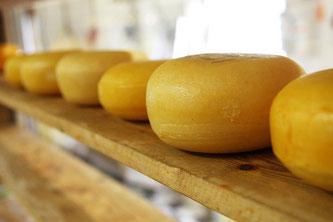 Käse reifen Holz