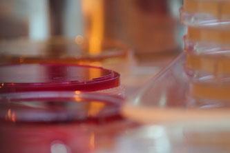 Labor Petrischalen Glas