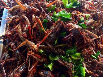 Insekten kochen essen neuartige Lebensmittel