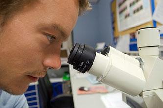 Laborant blickt in Mikroskop