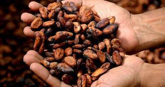 Kakao Bohnen Hände