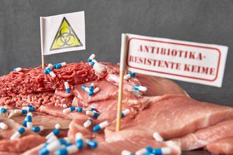 Schweinefleisch Tabletten Antibiotika