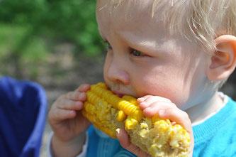 Kleinkind isst Mais
