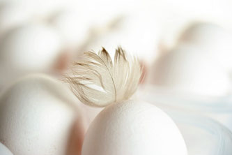 Eier Feder