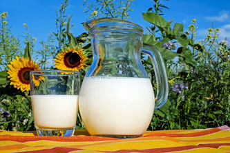Milch vor Sonnenblumen