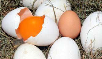 Eier Nest aufgeschlagen
