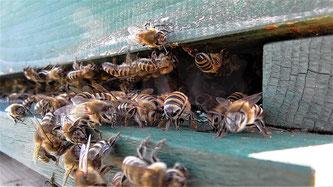 Bienen Bienenstock