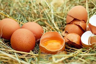 Eier Nest roh aufgeschlagen