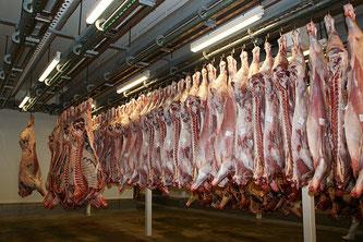 Schlachthof Rinderhälften