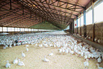 Hühner Stall Tierhaltung