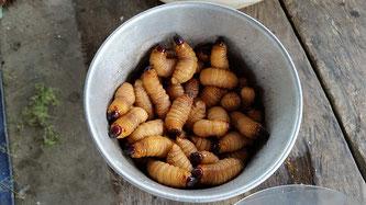 Würmer essen ekelhaft