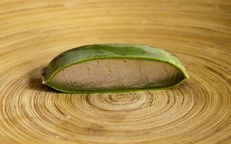 Aloe Vera auf Holz