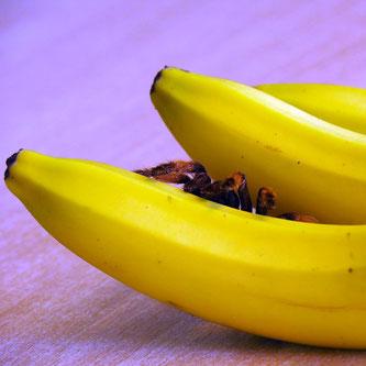 Spinne auf Banane