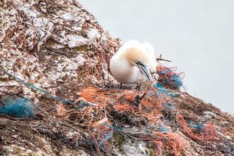 Vogel Netz Platzik