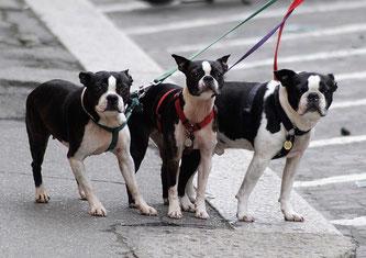 hond angst voor verkeer blog