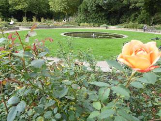 Bild: Der Rosengarten im Stadtpark