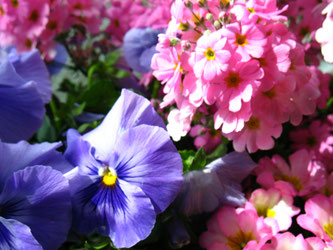 花のケアも成婚へのケアも一生懸命取り組んでます。
