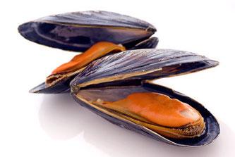 Miesmuscheln, Bild: fotolia.com