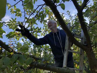Foto: Petra Schweim - Blüten-Überlebensakrobat für Apfelbäume - Johannes Boysen