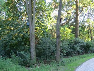 Im Park gibt es trotz Nutzung weitläufige Rückzugsbereiche und Unterschlupfmöglichkeiten für heimische Wildtiere. Foto: NABU Leipzig