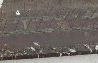 Gefährliche Taubenabwehr-Spikes. (Symbolfoto)