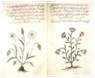 Adaptogene sind in Pflanzen und Pilzen vorkommende Wirkstoffe - Zimmerli Adaptogene