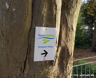 Ein Wanderhinweis der Teutoschleifen an einem Baum. Darunter ein Pfeil nach rechts.