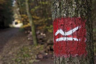 Ein Baumstamm mit einem aufgemalten weißen R auf rotem Grund.
