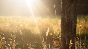 Sonne und ein Baum und Gräser sind hier zu sehen.