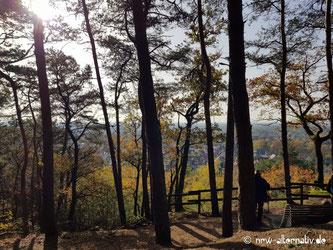 Bunte Bäume im Herbst mit Blick auf ein Tal. Eine Aussicht auf dem Waldauenweg, einer der Teutoschleifen.