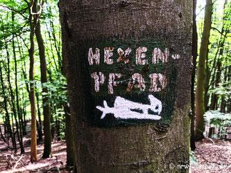 Ein brauner Waldweg, umstanden von grünen Bäumen.