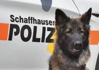 Symbolbild (Bildquelle: Schaffhauser Polizei)